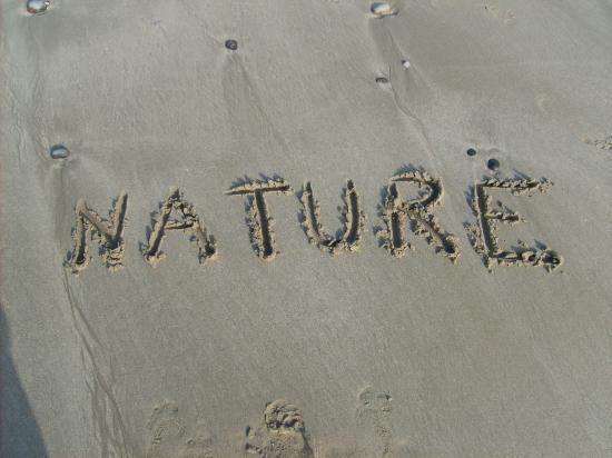 Observer la nature, les animaux si possible sans les déranger encore moins les tuer !