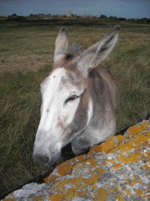 Préoccupons nous aussi des animaux dit d'élevage ; tout passe par leur regard qui en dit long !