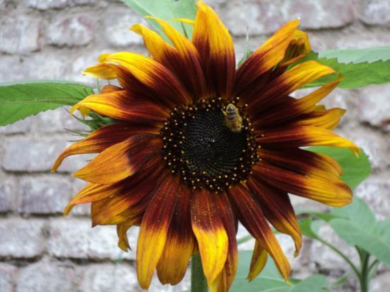 Laissons tout les insectes en paix y compris dans nos intérieurs !